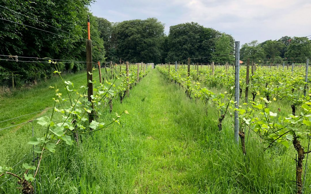 10 things you probably didn't know about Dutch wine